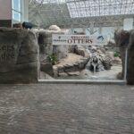Thumbnail of http://Otters%20on%20the%20Edge%20-%20NC%20Aquarium